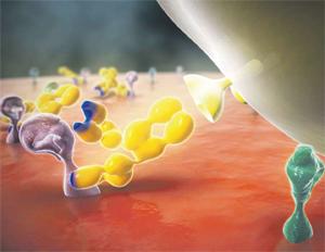 Bild Antikörper